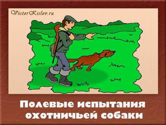 испытание охотничьей собаки
