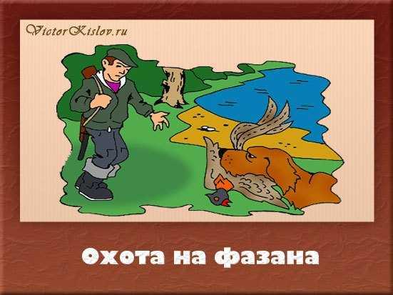 охота на фазана, охота с собакой
