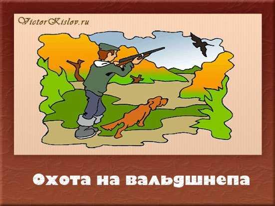 охота на вальдшнепа, охота с собакой