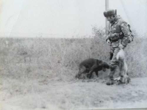 охота на зайцев с собакой