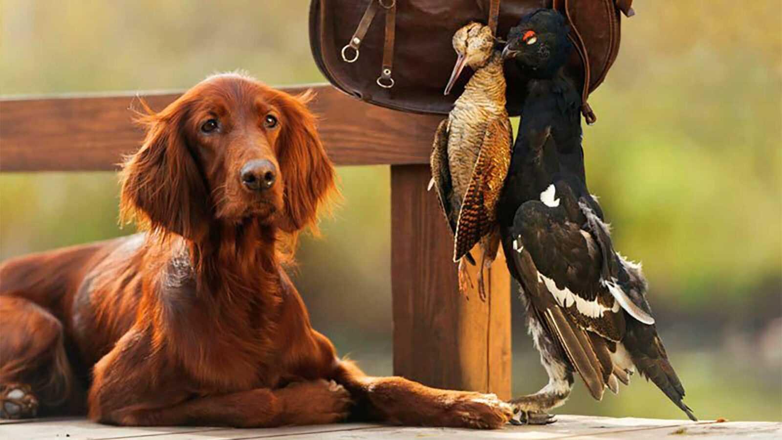 Как родилась повесть об охотничьей собаке Истре